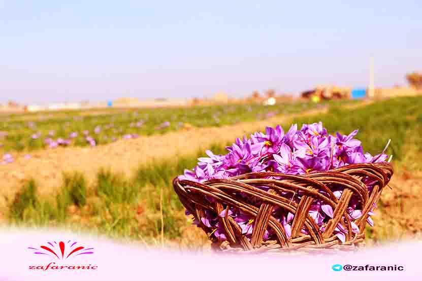 buy-saffron
