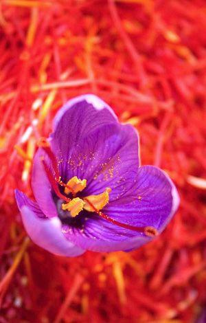 تشخیص زعفران اصلی