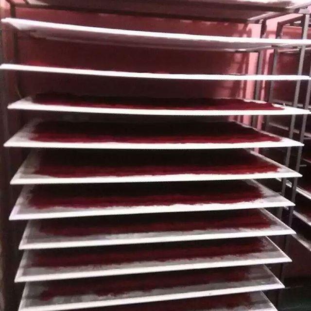 دستگاه زعفران خشک کن خانگی