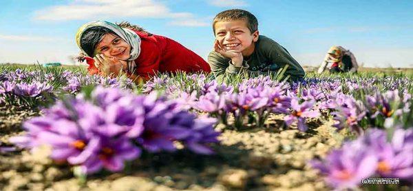 تور بازدید ازقنات قصبه و مزارع زعفران گناباد