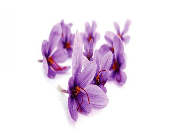 خرید زعفران ارگانیک