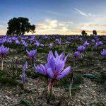 آیا افزایش قیمت دلار روی قیمت زعفران تاثیر دارد