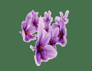 خرید زعفران اینترنتی
